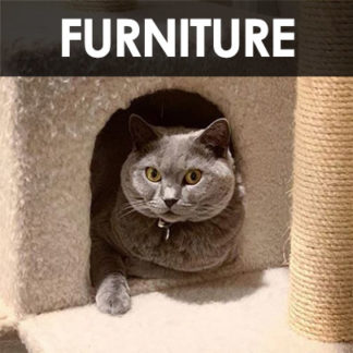 Cat Trees and Furniture